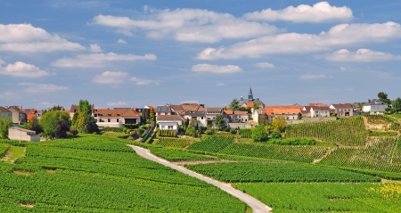 champagne region: Village of Cramant near Epernay in Champagne Region,France Stock Photo