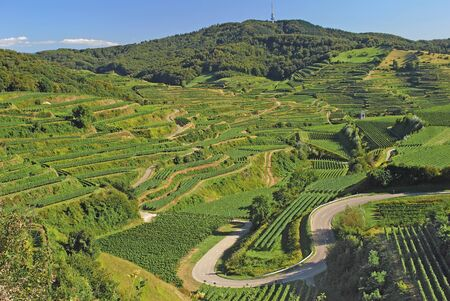 Vineyards in Kaiserstuhl Region,Black Forest,Germany