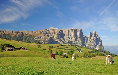 Seiseralm and Mount Sciliar near Kastelruth,South Tyrol,Italy
