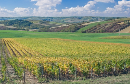 typical Vineyard Landscape in Burgundy near Chablis,France Standard-Bild