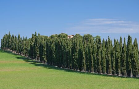 typical Landscape in Tuscany with Cypresses Alley Stock Photo - 18903833