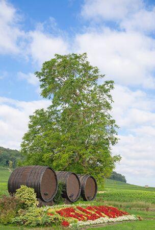 champagne region: Vineyard in Champagne Region near Epernay in France