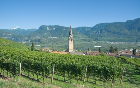 Wine Village of Tramin at South Tyrolean Wine Route near Merano and Bolzano,South Tyrol,Italy Standard-Bild