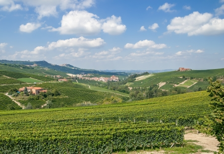 Vineyard Landscape in Piedmont with Barolo and La Morra in Background