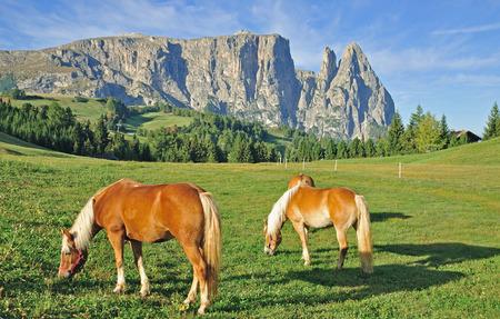 Seiser Alm und Schlern, Südtirol, Italien