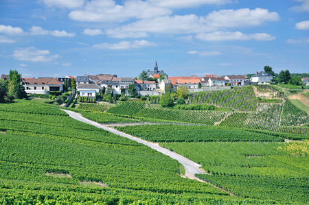 champagne region: Wine Village of Cramant near Epernay in Champagne region,France