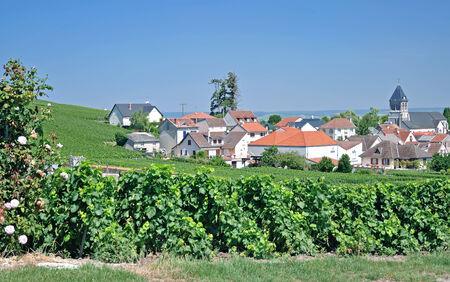 champagne region: Wine Village of Oger near Epernay,Champagne region,France