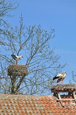 masuria: Zywkowo, Village of Storks, Masuria, Poland