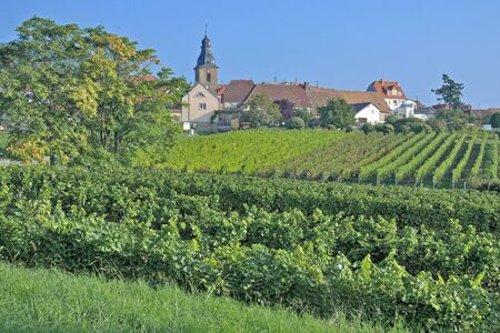 wine road: Frankweiler,German Wine Road,Palatinate,Germany