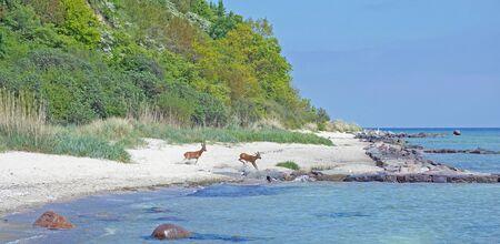 mecklenburg  western pomerania: Coastal Landscape,Ruegen Island,baltic Sea,Germany Stock Photo