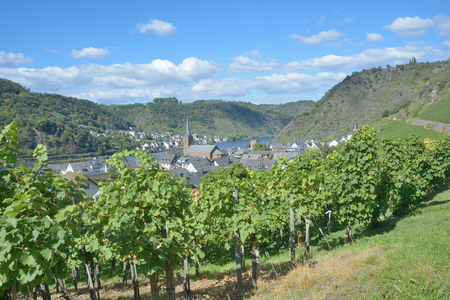 mosel: Wine Village of Alken at Mosel River in Mosel Valley,Germany