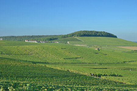 champagne region: Champagne region near Epernay in Champagne-Ardennes,France