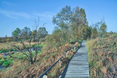 moor: wooden Footpath through Hohes Venn Moor,Monschau,Eifel,Germany