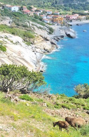 elba: Village of Pomonte on Elba Island,Tuscany,mediterranean Sea,Italy
