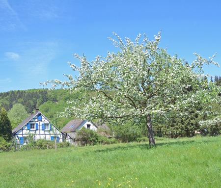 rhine westphalia: Springtime in Bergisches Land at Solingen Fruit Trail,North Rhine Westphalia,Germany