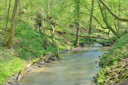 rhine westphalia: River Duessel in famous Neandertal Valley near Duesseldorf Mettmann,North Rhine Westphalia,Germany Stock Photo