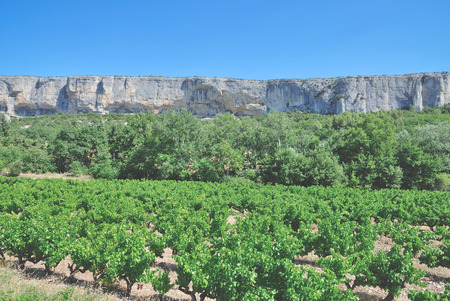 tourismus: Vineyard Landscape in Provence,South of France Stock Photo