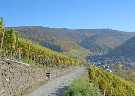 hiking trail: Red Wine Hiking Trail through Vineyard,Ahr Wine region,Germany