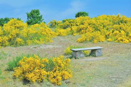 mecklenburg western pomerania: Springtime at Moenchgut on Ruegen island,baltic Sea,Germany