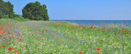 mecklenburg western pomerania: Springtime on Ruegen Island at baltic Sea,Mecklenburg western Pomerania,Germany
