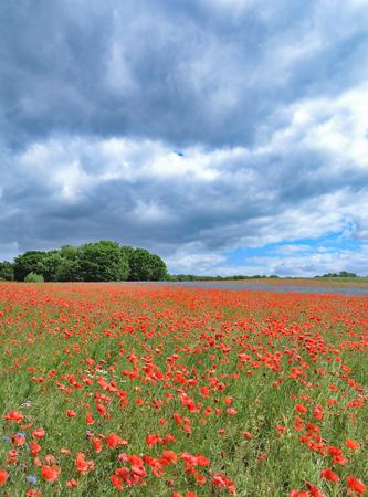 mecklenburg western pomerania: Summertime on Ruegen Island at baltic Sea in Mecklenburg western Pomerania,Germany Stock Photo
