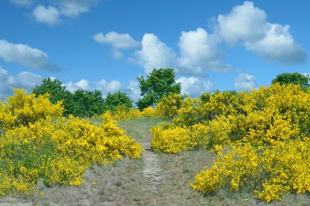 Springtime in Schafberg Bioreserve on Ruegen at baltic Sea,Mecklenburg western Pomerania,Germany
