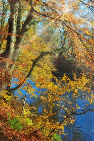 indian Summer at Wupper River in Bergisches Land,North rhine westphalia,Germany