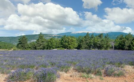 idyllic Landscape with famous Mont Ventoux in Background, in Provence,France