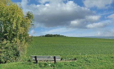 Vineyard Landscape in Champagne region near Epernay,France 免版税图像