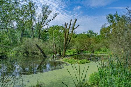 Landscape in Urdenbacher Kaempe Nature Reserve,Rhine River,Duesseldorf,Germany