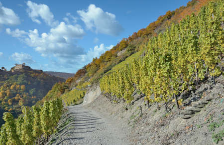 Red Wine Hiking Trail in Ahrtal,Germany
