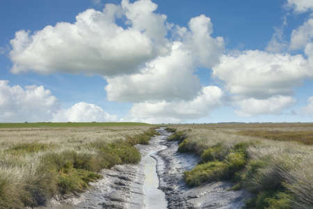 Salt Marsh in North Frisia near Westerhever Lighthouse,North Sea,Wattenmeer National Park,Germany