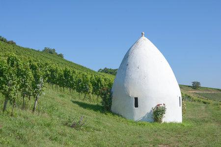 Vineyard Landscape in Rhinehessen Wine region,Rhineland-Palatinate,Germany