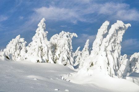 Winter Landscape on Brocken Mountain in Harz Mountain,Germany Standard-Bild