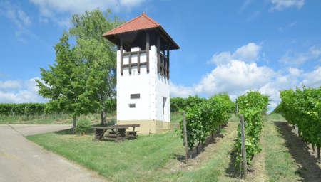 Vineyard and Watch Tower in Rhinehessen wine region,Rhineland-Palatinate,Germany