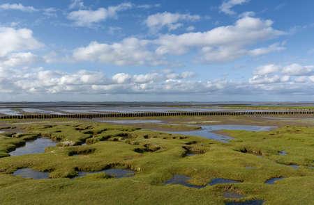 Salt Marsh,North Sea,North Frisia,Germany Standard-Bild