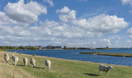view to Village of Lemkenhafen on Fehmarn,baltic Sea,Schleswig-Holstein,Germany