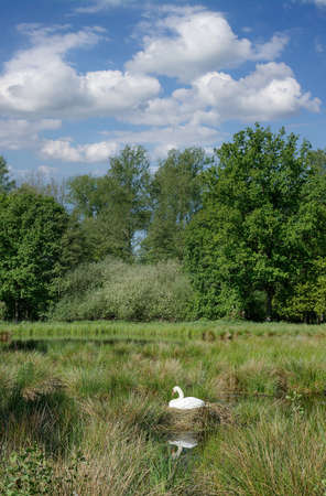 idyllic Landscape in Rhineland,Germany