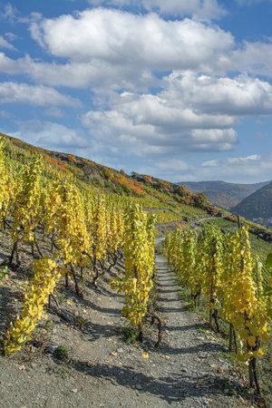 Footpath through Vineyard in Ahrtal,Rhineland-Palatinate,Germany