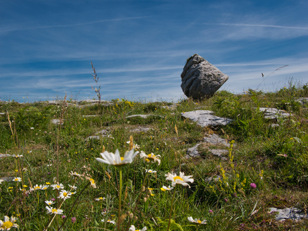 Beautiful flower meadow with a standing boulder in the background Stock Photo