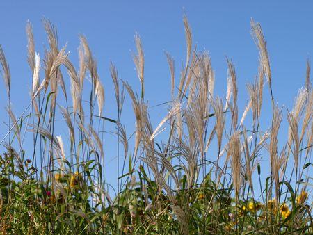 空に対して草 写真素材 - 4886503