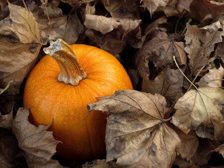 Pumpkin in leaves Stock Photo