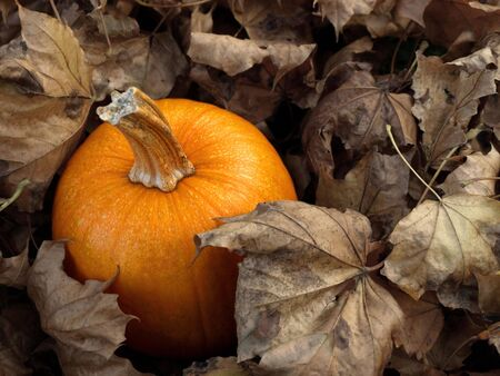 Pumpkin in leaves Stock Photo