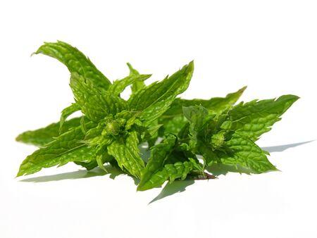 spearmint: Spearmint leaves Stock Photo