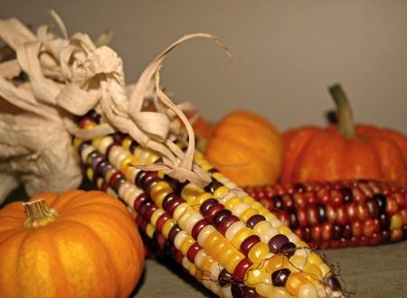 収穫のトウモロコシ、ひょうたんの秋の装飾
