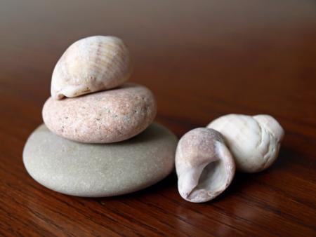 着用と風化の岩や海からシェル