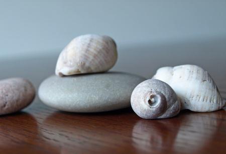 摩耗や風化岩や海からシェル 写真素材 - 11011180