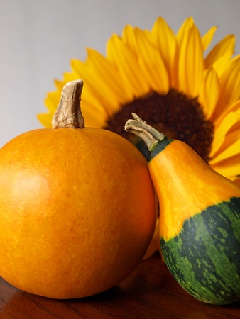 Decorative autumn gourds with a sunflower