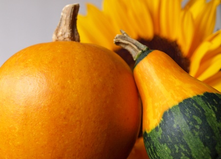 Two squash with sunflower background