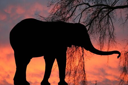 An elephant silhouette against a sunrise background photo